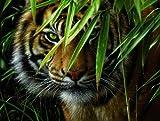 MAMMUT 108007 - Malen nach Zahlen Artists, Tiermotiv, Tiger, Komplettset mit bedruckter Malvorlage im A3 Format, 20 Acrylfarben und Pinsel, großes Malset für Kinder ab 8 Jahre