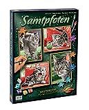 Schipper 609340554 609340554-Malen nach Zahlen-Samtpfoten (Quattro), je 18x24 cm