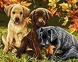 DIY Digital Leinwand-Ölgemälde Geschenk für Erwachsene Kinder Malen Nach Zahlen Kits Home Haus Dekor - Hunde 40*50 cm