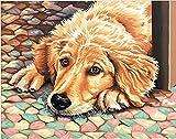 Maße paintworks Malen nach Zahlen Hund Müde Paint Kit