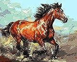 CaptainCrafts Neu Malen Nach Zahlen 16x20 für Erwachsene Anfänger Kinder, Kinder Leinwand - Laufen Rot Erwachsene Pferd (mit Rahmen)