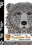 Postkarten – Faszination Tiere: Ausmalen & Staunen