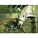 REEVES Malen nach Zahlen ' Artist Collection ' für Erwachsene, 30x40cm, 20 Farben, Motiv - Pferd & Katze